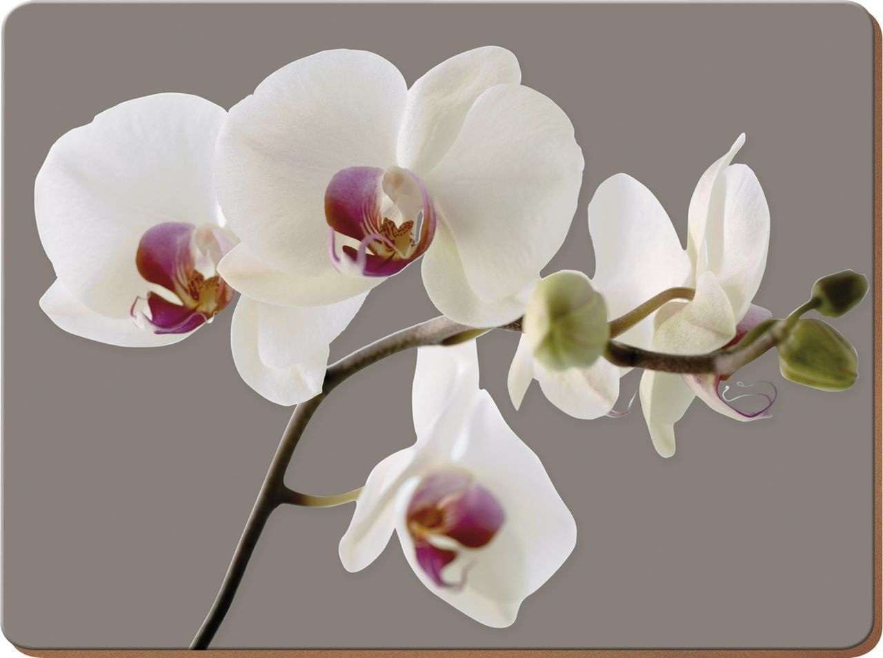 Creative Tops Orchid Harmony Pack Of 4 Large Premium Placemats