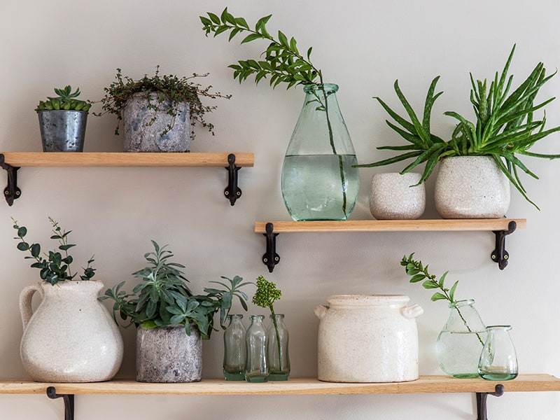 A selection of pots and vases with greenery sitting on shelves