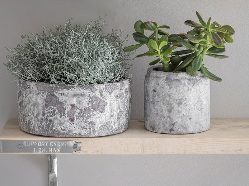 Grey glazed bowl and pot containing house plants