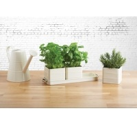 Living Nostalgia Antique Cream Herb Pots with Tray