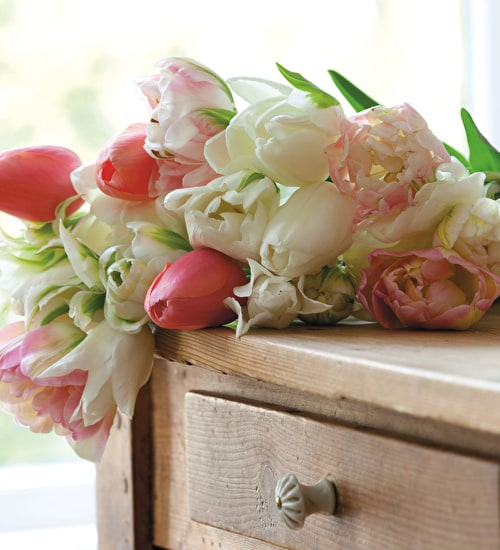 Best Pale Tulip Collection
