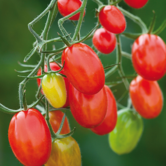 Seeds to Sow This Week