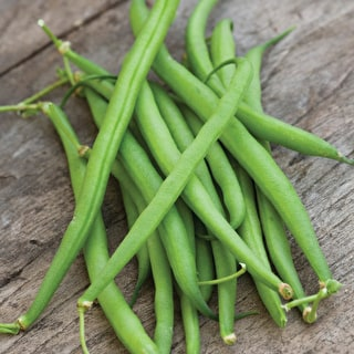 French Bean 'Speedy' Dwarf