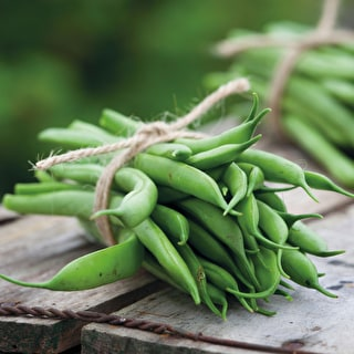 French Bean 'Masterpiece'