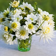White Garden Dahlia Collection