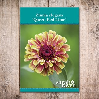 Zinnia elegans 'Queen Red Lime'