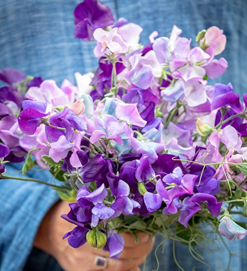 Blue Sweet Pea Collection