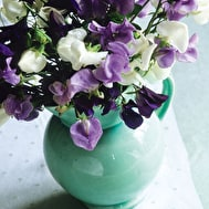 Amethyst Sweet Pea Mix