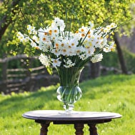 Highly Scented Narcissi Collection
