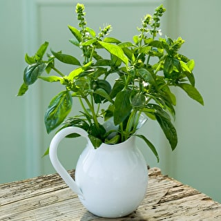 Basil 'Greek'