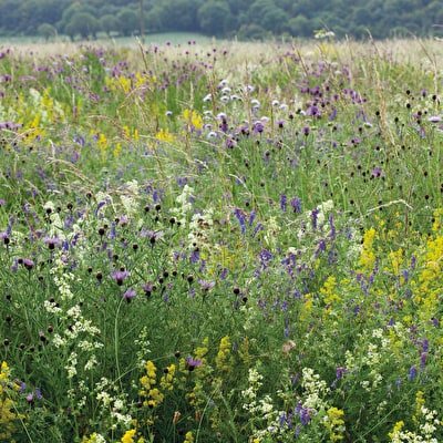 Sarah Raven Wild Flower Meadow Mix Seeds
