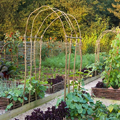 Square Metre Veg Plot 1