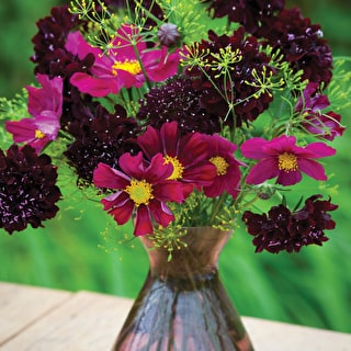 Sarah Raven's Dark Cut Flower Mix