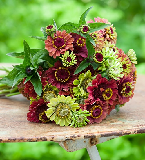 New Zinnia Collection