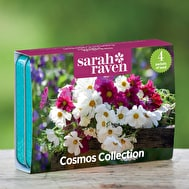 Sarah Raven Cosmos Seed Collection